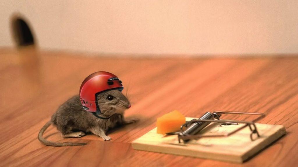 شركة مكافحة الفئران في ابها