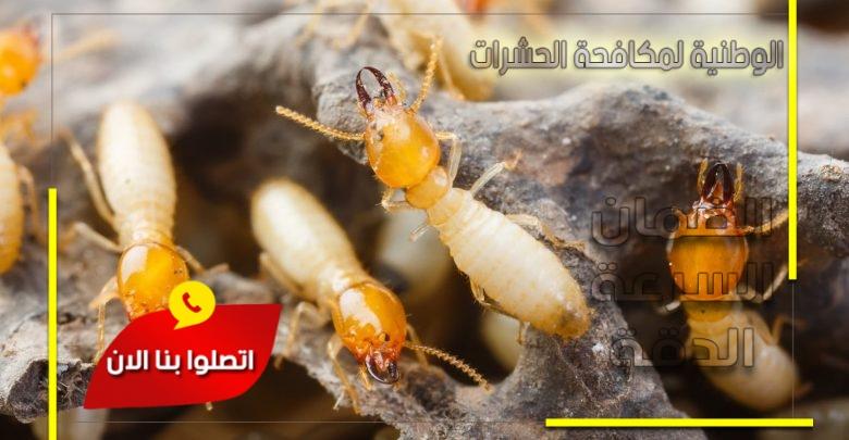 مكافحة النمل الابيض بجدة والقصيم